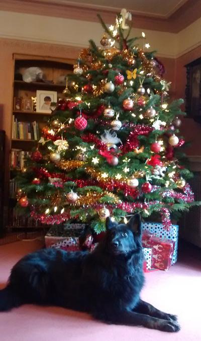 Christmas tree & dog
