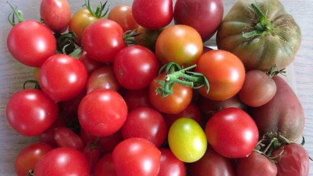 last-tomatoes.